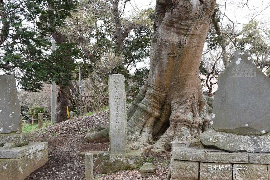 藤沢城髪塔塚